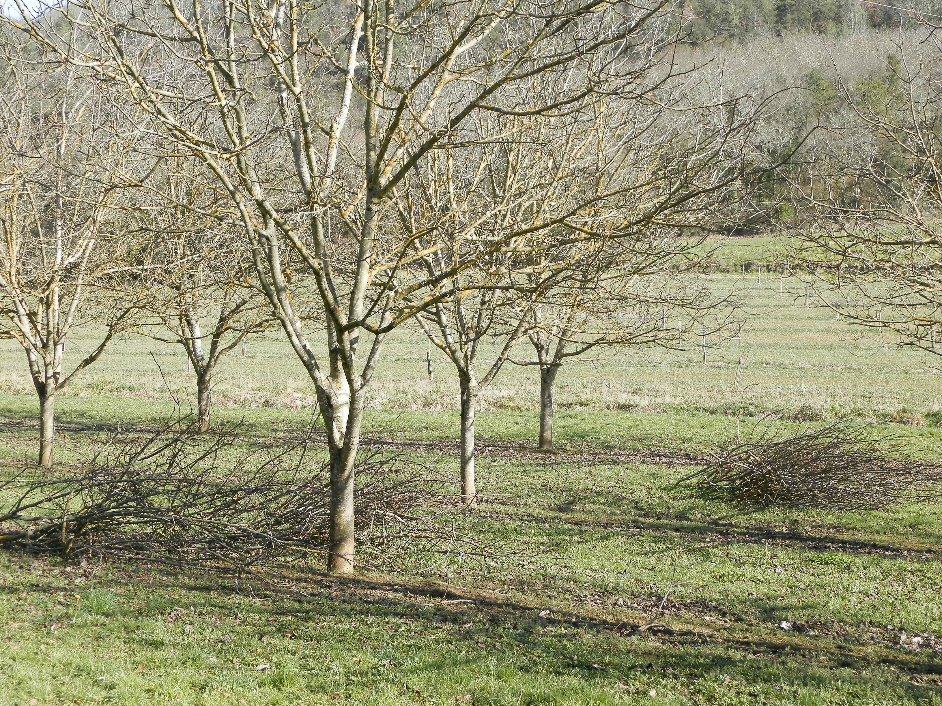 Périgord walnuts - worth their weight in gold  Discover more